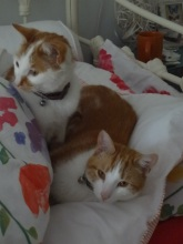 George and Desmond usurped my nesting spot.