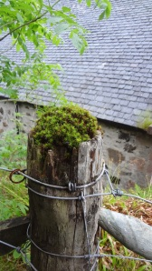 Post behind the church with moss on top.